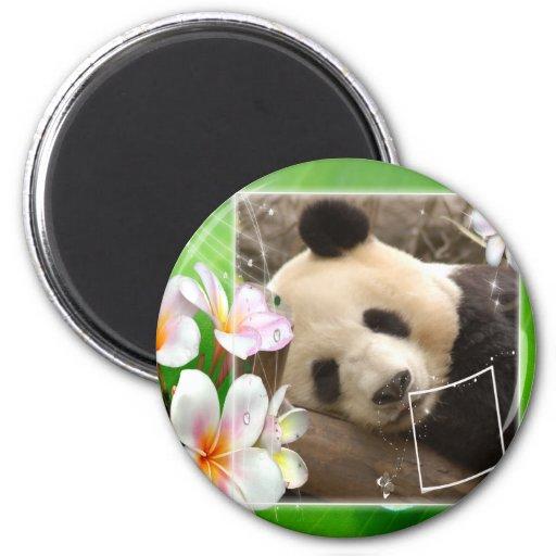 panda2-00014-85x85 imán de nevera