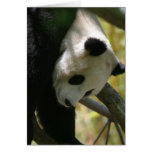 Panda #1 greeting card