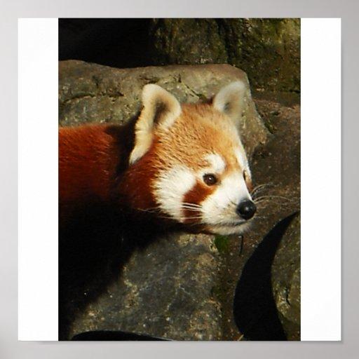 panda 3 impresiones