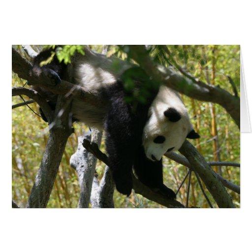 Panda #4 cards