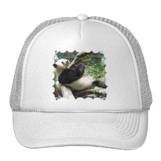 Panda and Bamboo Baseball Hat