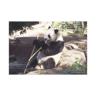Panda at Dinner on Canvas Stretched Canvas Print