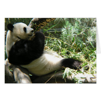 Panda at the San Diego Zoo Greeting Cards