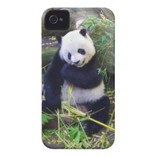 Panda at the San Diego Zoo iPhone 4 Case-Mate Case