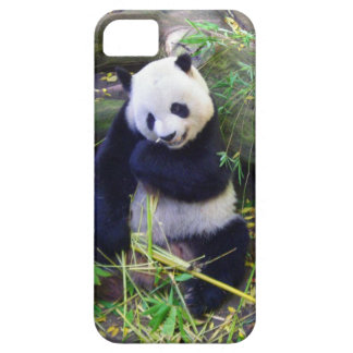 Panda at the San Diego Zoo iPhone SE/5/5s Case