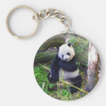 Panda at the San Diego Zoo Key Chains