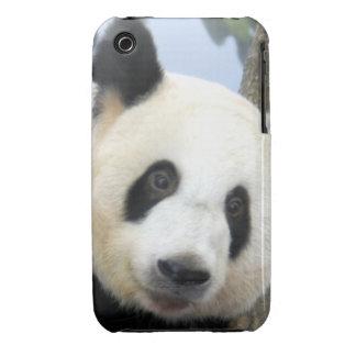 panda-bear10x10 Case-Mate iPhone 3 cases