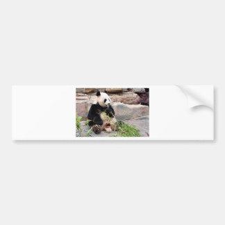 Panda bear at zoo bumper sticker