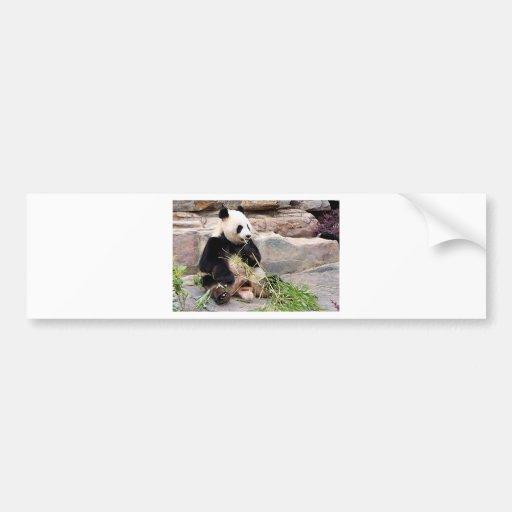 Panda bear at zoo bumper stickers