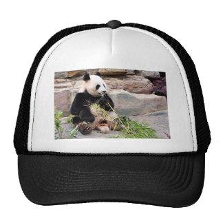 Panda bear at zoo trucker hat