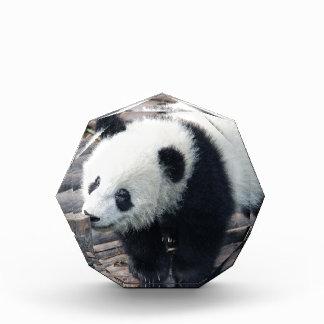 panda bear bears custom personalize Anniversaries Award