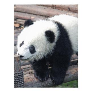 panda bear bears custom personalize Anniversaries Letterhead