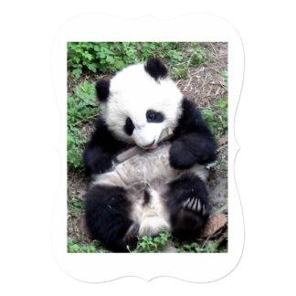 Panda Bear Bites Stick, Has Cool Claws Card