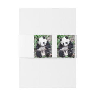 Panda Bear Bites Stick, Has Cool Claws Invitation Belly Band