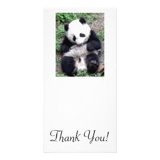 Panda Bear Bites Stick, Has Cool Claws Photo Greeting Card