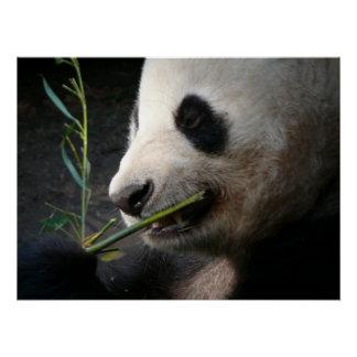 Panda Bear Black White Animal Zoo Wild Pattern Art Poster