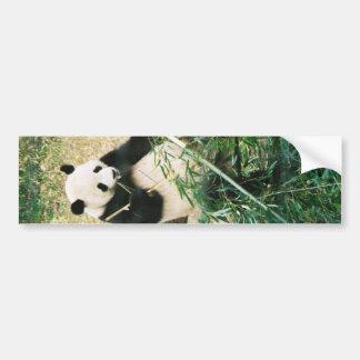 Panda Bear Bumper Sticker Car Bumper Sticker