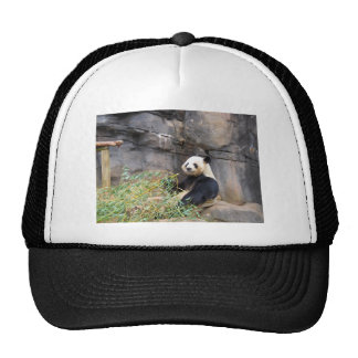 Panda Bear China Hats