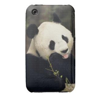 Panda bear, (Close-up) iPhone 3 Case-Mate Case