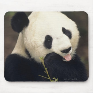 Panda bear, (Close-up) Mouse Pad