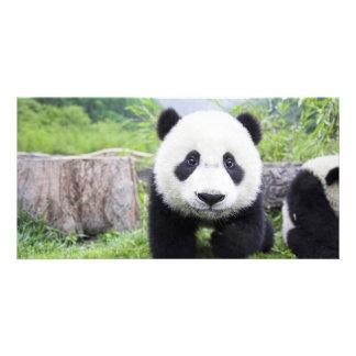 Panda Bear closeup Card