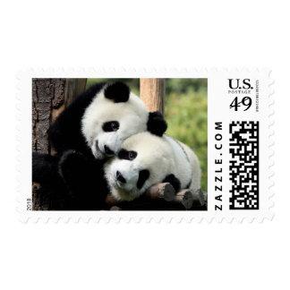 Panda Bear closeup Postage