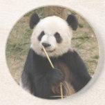 Panda Bear Coaster
