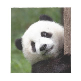 Panda Bear Cub Notepads