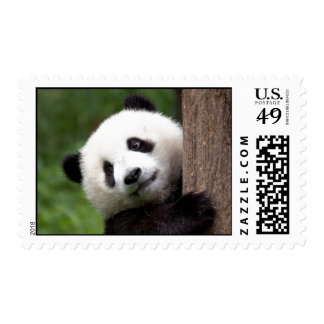 Panda Bear Cub Postage Stamps