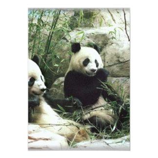 Panda bear eating and playing card