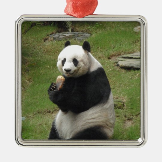 Panda Bear eating some bamboo Metal Ornament