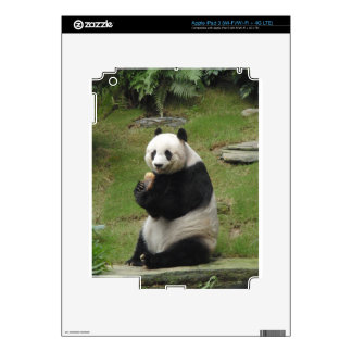 Panda Bear eating some bamboo iPad 3 Decals