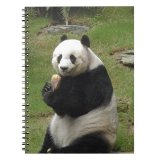 Panda Bear eating some bamboo Spiral Notebook