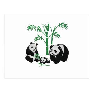 Panda Bear Family Postcard