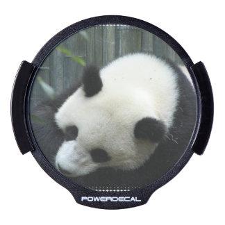 Panda Bear LED Car Decal