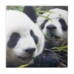 Panda Bear Hugs Ceramic Tile