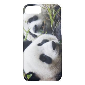 Panda Bear Hugs iPhone 8/7 Case