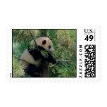 Panda Bear Hugs Postage Stamps
