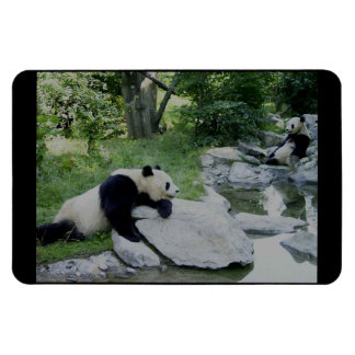 Panda Bear Hugs Rectangular Photo Magnet