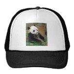 Panda Bear Mesh Hats