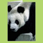 Panda Bear on Rocks Card