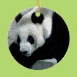 Panda Bear on Rocks Ceramic Ornament