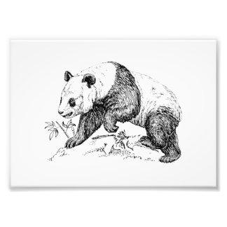 Panda Bear Photo Print