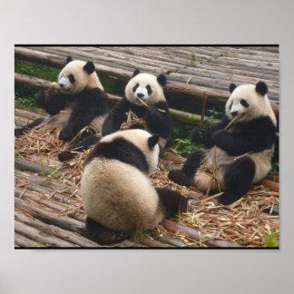 Panda bear poster