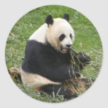 Panda Bear Round Stickers