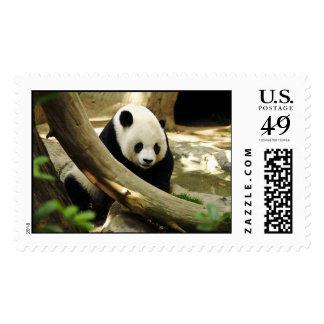 PANDA BEAR SMILE POSTAGE STAMPS