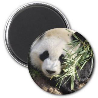 Panda Bear Zoo Atlanta Fridge Magnet