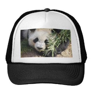Panda Bear @ Zoo Atlanta Trucker Hat
