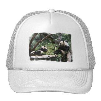 Panda Bears Baseball Hat