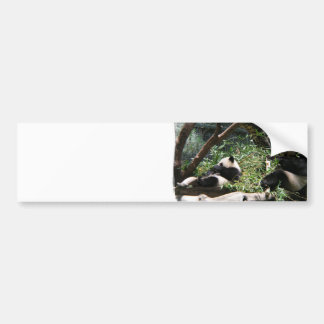 Panda Bears  Bumper Stickers